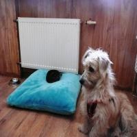 Воспитание щенка с первых дней пребывания в доме