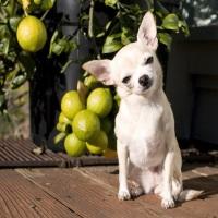 Нехватка витаминов у щенка