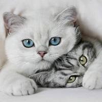 Забавные и необычные факты о кошках