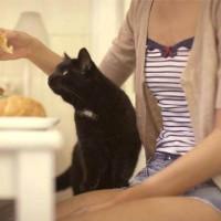 Правила грамотного кормления кошки