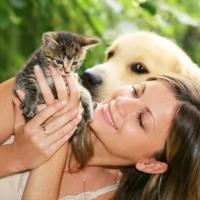 Польза от домашних животных
