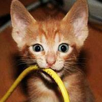 Что в нашем доме опасно для кошки