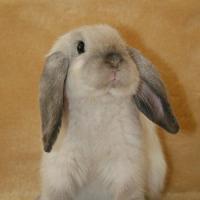 Какие проблемы ожидают хозяина кролика