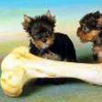 Почему собаки грызут кости?
