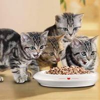 Множество видов еды для кошек