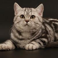 Что делать, если у кота нет аппетита