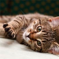 """Кошки - """"интерактивные"""" животные"""