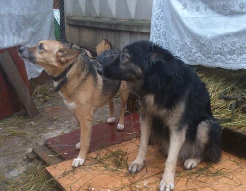 Яночка и Глаша