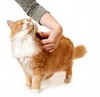 Линька у кота