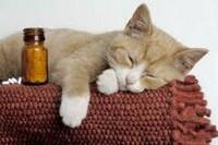 Как дать кошке лекарство