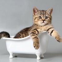Почему кошки не любят купаться?